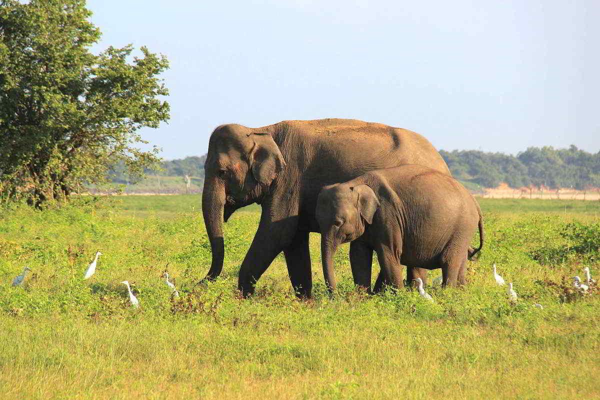 Izrada utakmica za Šri Lanku