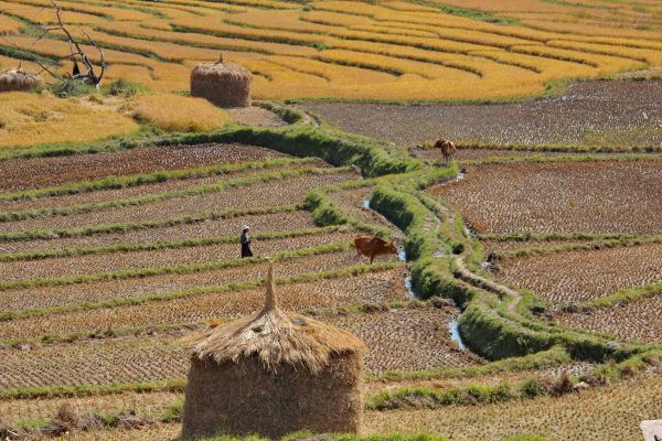 Putovanje-Butan-Zemlja-munjevitog-zmaja (11)