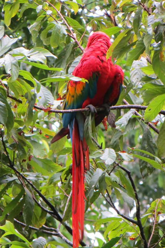 Putovanje-Ekvador-Ande-Amazona-i- Galapagos (14)