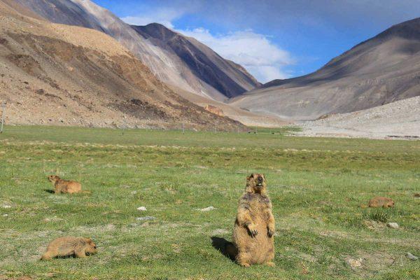 Putovanje-Indija-Himalajom-kroz-Ladak-i-Kasmir (4)