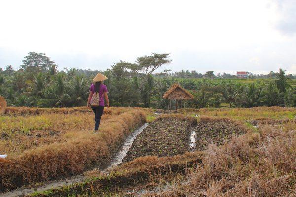 Putovanje-Indonezija-Bali-otok-bogova (10)