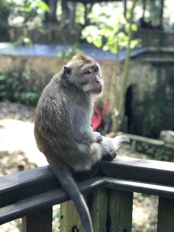 Putovanje-Indonezija-Bali-otok-bogova (2)