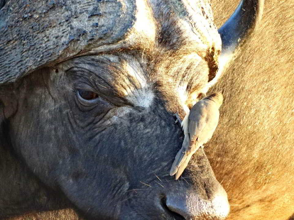 Putovanje-Juznoafricka-Republika-i-Zimbabve-Viktorijini-slapovi-i-Juznoafricka-Republika (4)