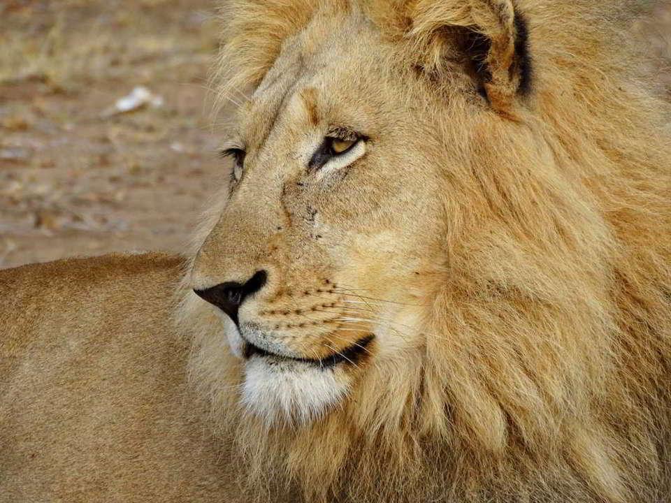 Putovanje-Juznoafricka-Republika-i-Zimbabve-Viktorijini-slapovi-i-Juznoafricka-Republika (8)