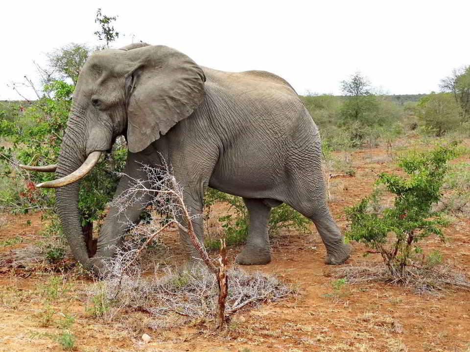 Putovanje-Juznoafricka-Republika-i-Zimbabve-Viktorijini-slapovi-i-Juznoafricka-Republika (9)