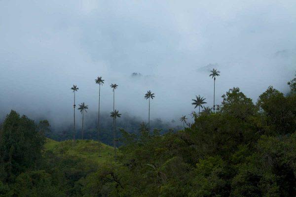 Putovanje-Kolumbija-Zemlja-boja-kave-i-plesa (13)