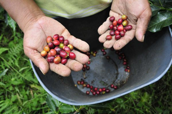 Putovanje-Kolumbija-Zemlja-boja-kave-i-plesa (3)
