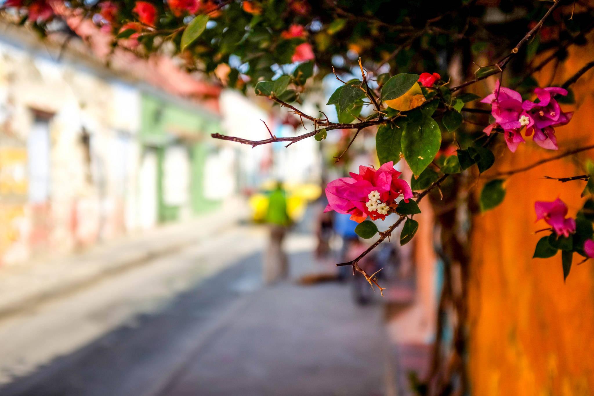 Putovanje-Kolumbija-Zemlja-boja-kave-i-plesa (5)