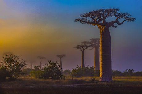 Putovanje-Madagaskar-Osmi-kontinent (7)