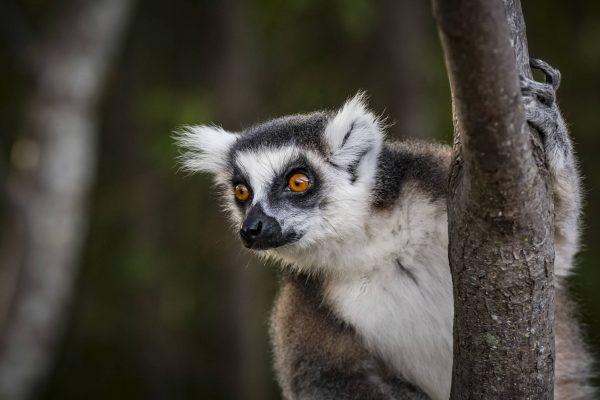 Putovanje-Madagaskar-Zemlja-lemura-i-kameleona (10)