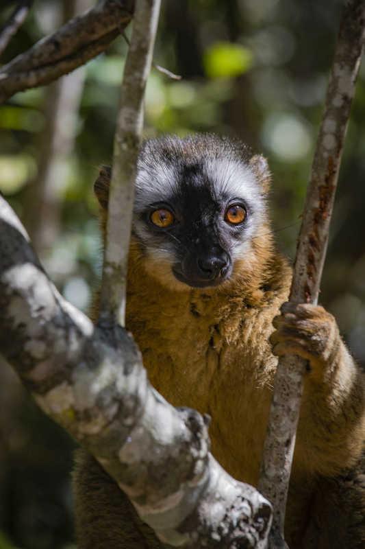 Putovanje-Madagaskar-Zemlja-lemura-i-kameleona (9)