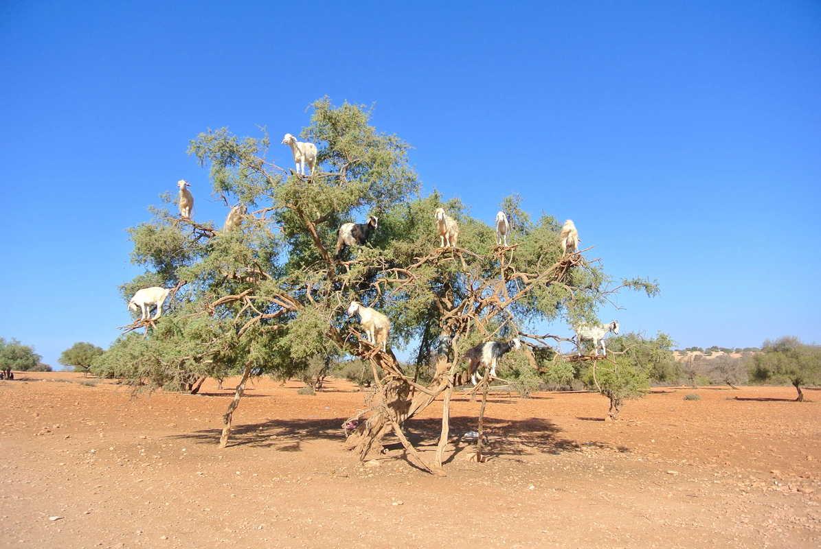 Putovanje-Maroko-Misticna-bajka-Maroka (6)