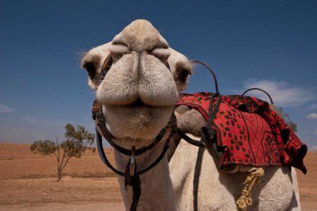 Putovanje-Maroko-Obiteljsko-putovanje (4)