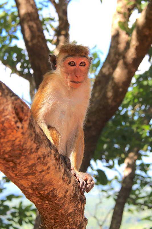 Putovanje-Sri-Lanka-Misticni-krajolici-zelenog-raja (11)