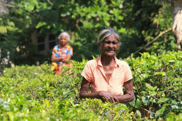 Putovanje-Sri-Lanka-Misticni-krajolici-zelenog-raja (5)