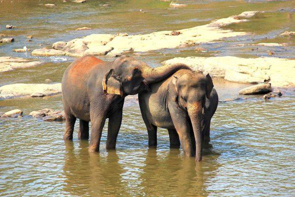 Putovanje-Sri-Lanka-Misticni-krajolici-zelenog-raja (6)