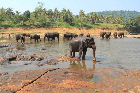 Putovanje-Sri-Lanka-Misticni-krajolici-zelenog-raja (9)