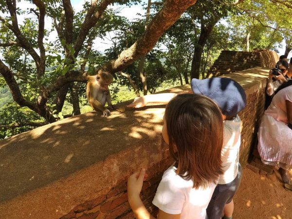 Putovanje-Sri-Lanka-Obiteljsko-Putovanje (15)