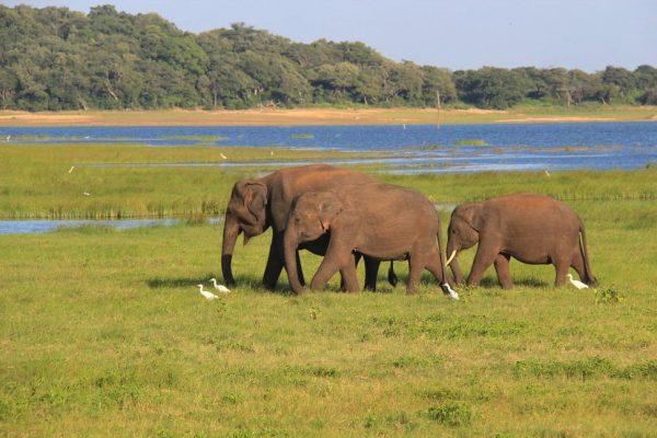 Putovanje-Sri-Lanka-Obiteljsko-Putovanje (2)