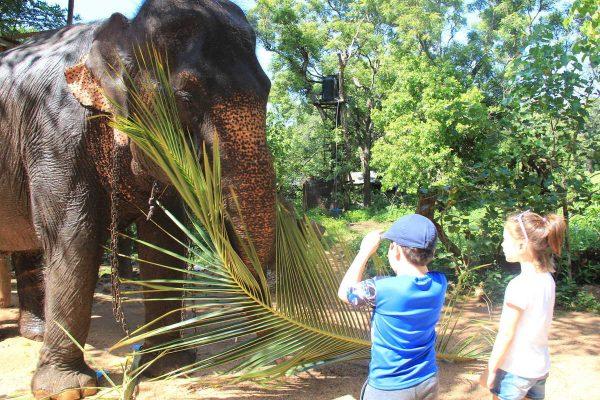 Putovanje-Sri-Lanka-Obiteljsko-Putovanje (7)