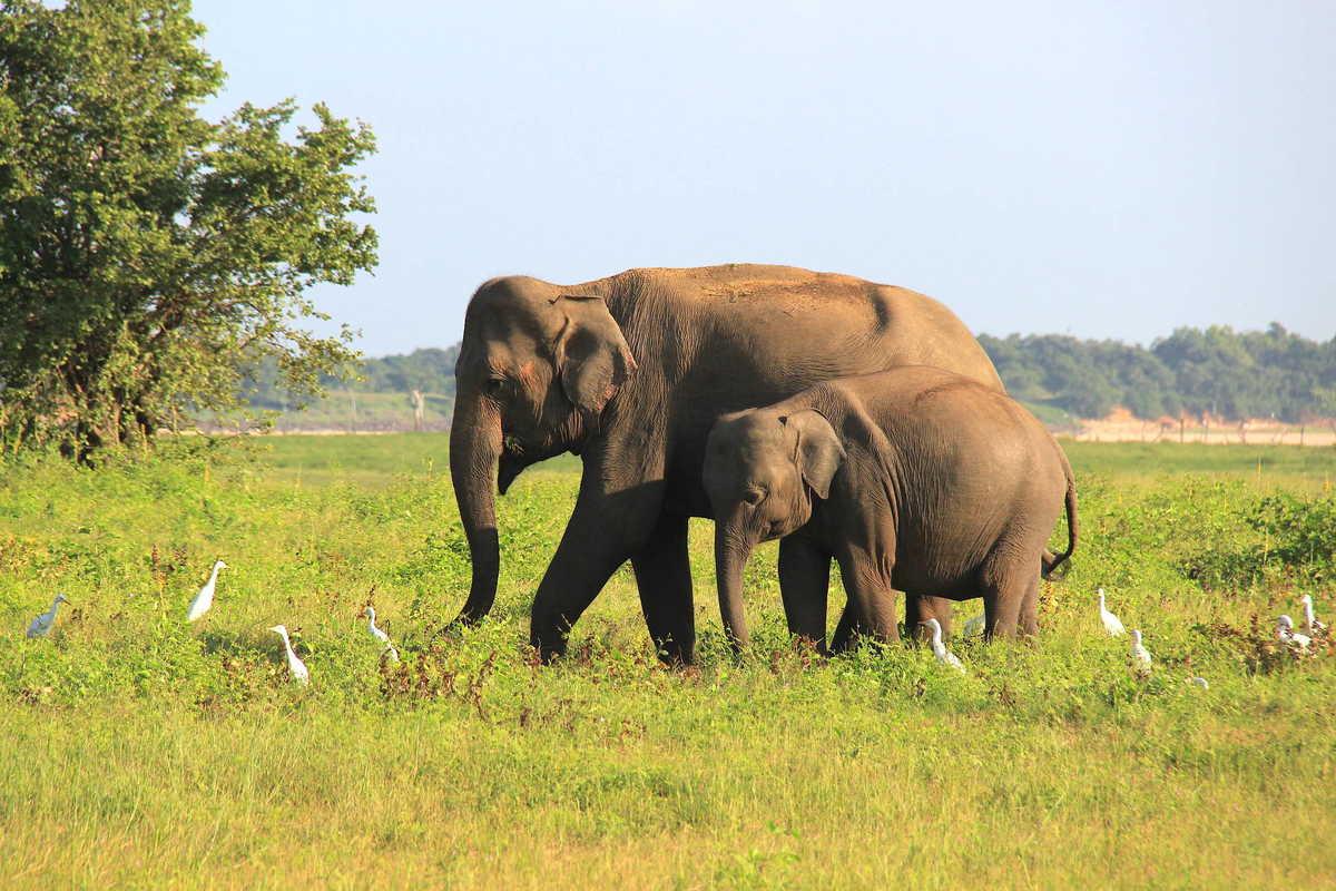 Putovanje-Sri-Lanka-Sjever-i-Istok (4)