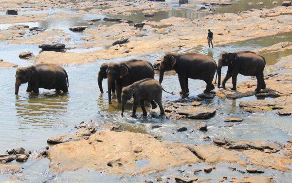 Putovanje-Sri-Lanka-Sjever-i-Istok (7)