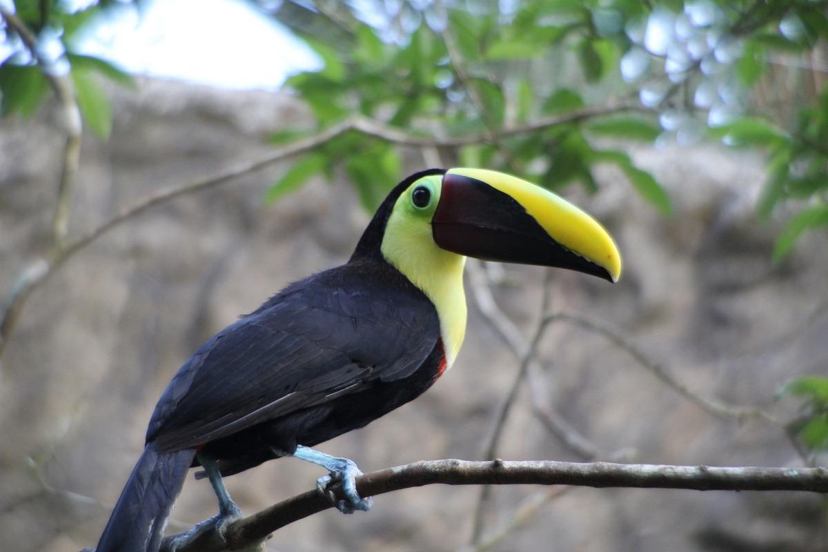 Putovanje-Kostarika-Zemlja vulkana (1)