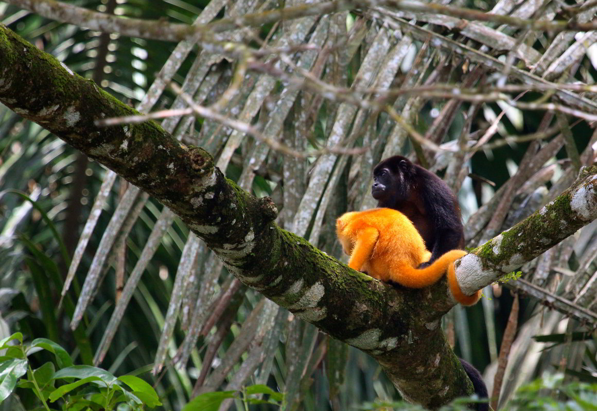 Putovanje-Kostarika-Zemlja vulkana (3)