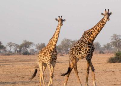 Clanak-Zambija-Zemlja-Leoparda (3)