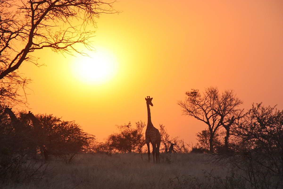 Clanak-Zambija-Zemlja-Leoparda (4)