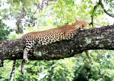 Clanak-Zambija-Zemlja-Leoparda (5)