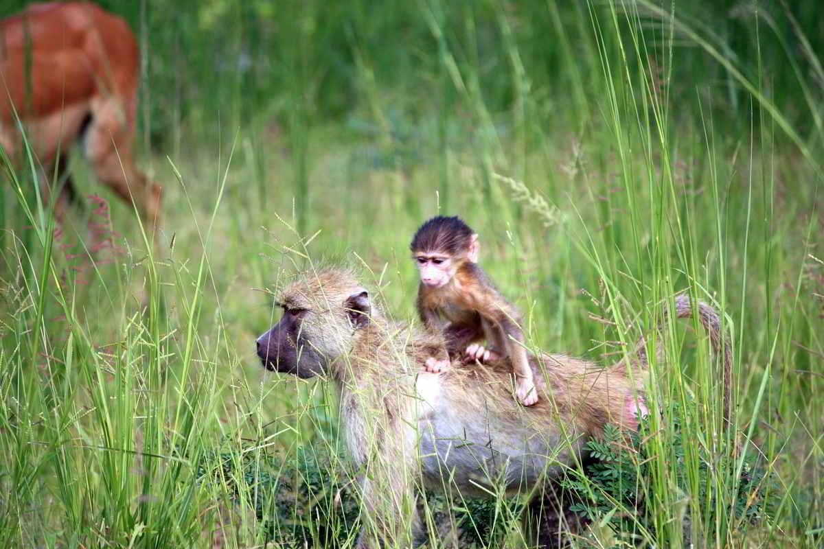 Clanak-Zambija-Zemlja-Leoparda (7)