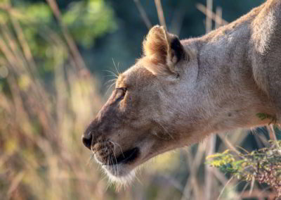 Clanak-Zambija-Zemlja-Leoparda (9)