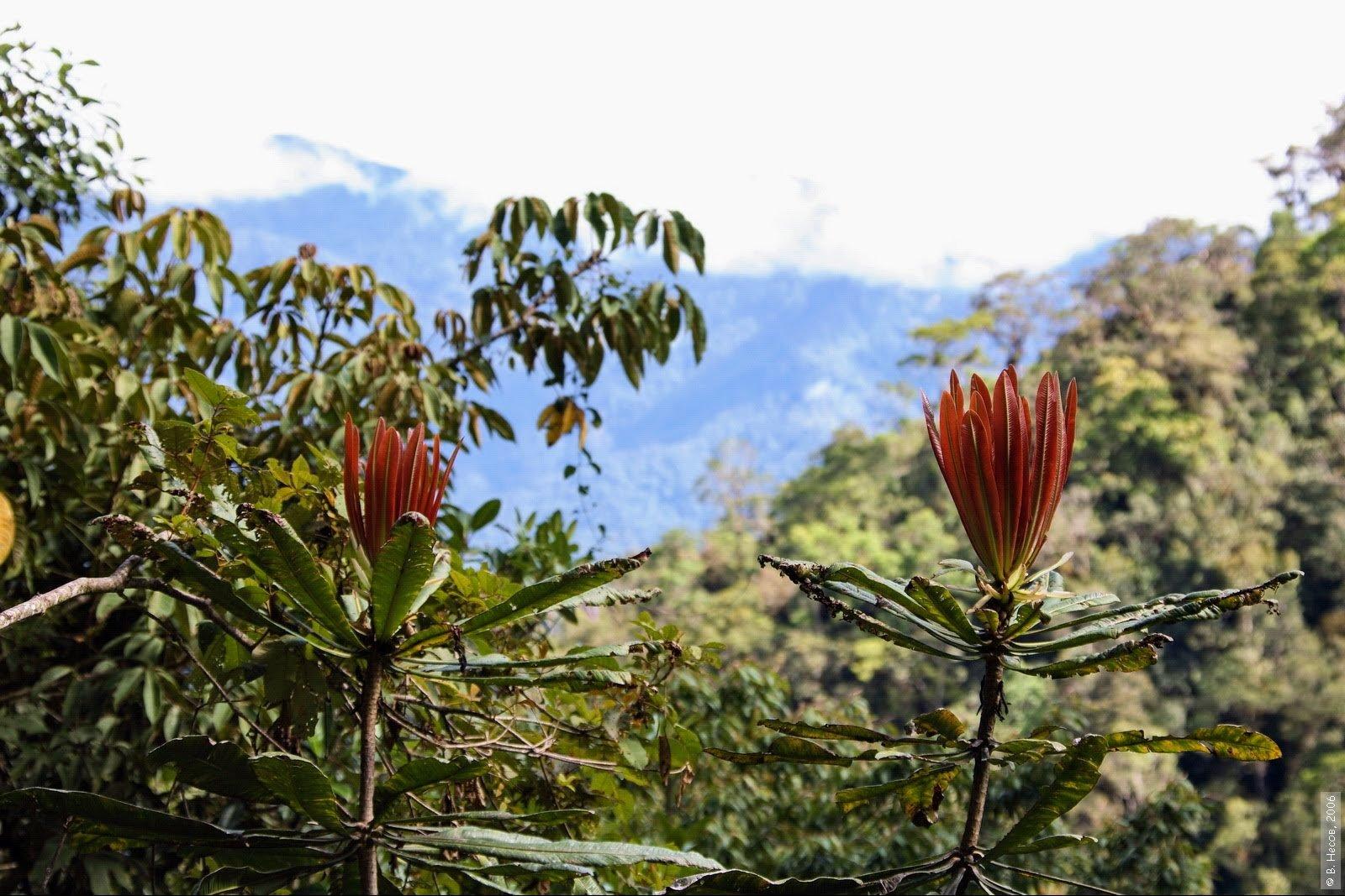 Putovanje Indonezija - Papua - Festival i treking u dolini Baliem (5)