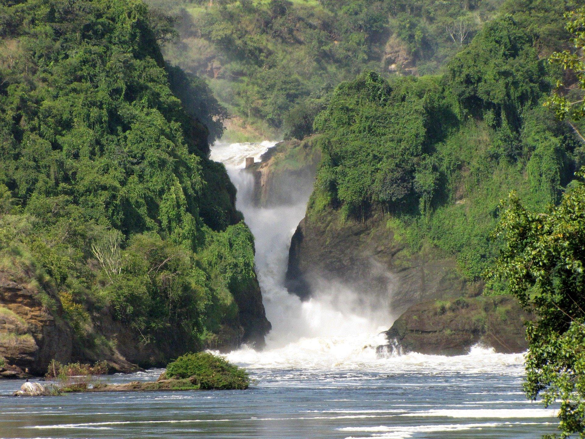 Uganda - U potrazi za nježnim divovima (11)
