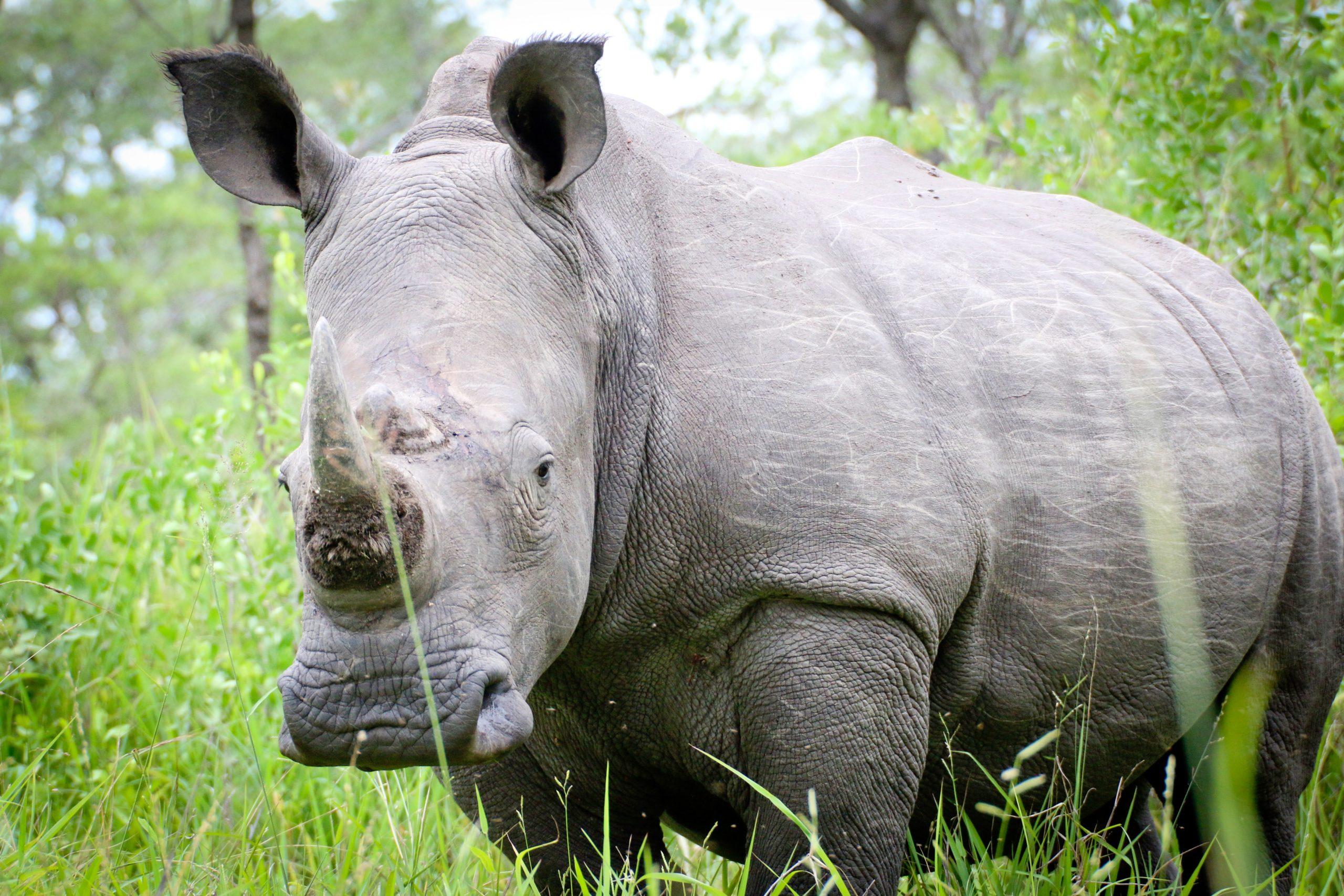 Uganda - U potrazi za nježnim divovima (5)