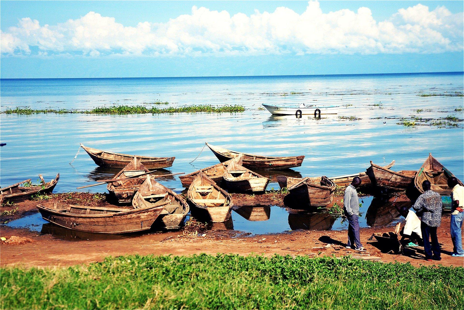 Uganda - U potrazi za nježnim divovima (7)