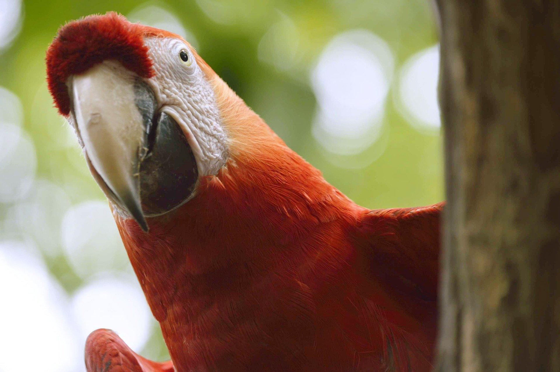 Putovanje Ekvador - Ekvador s Galapagosom (19)