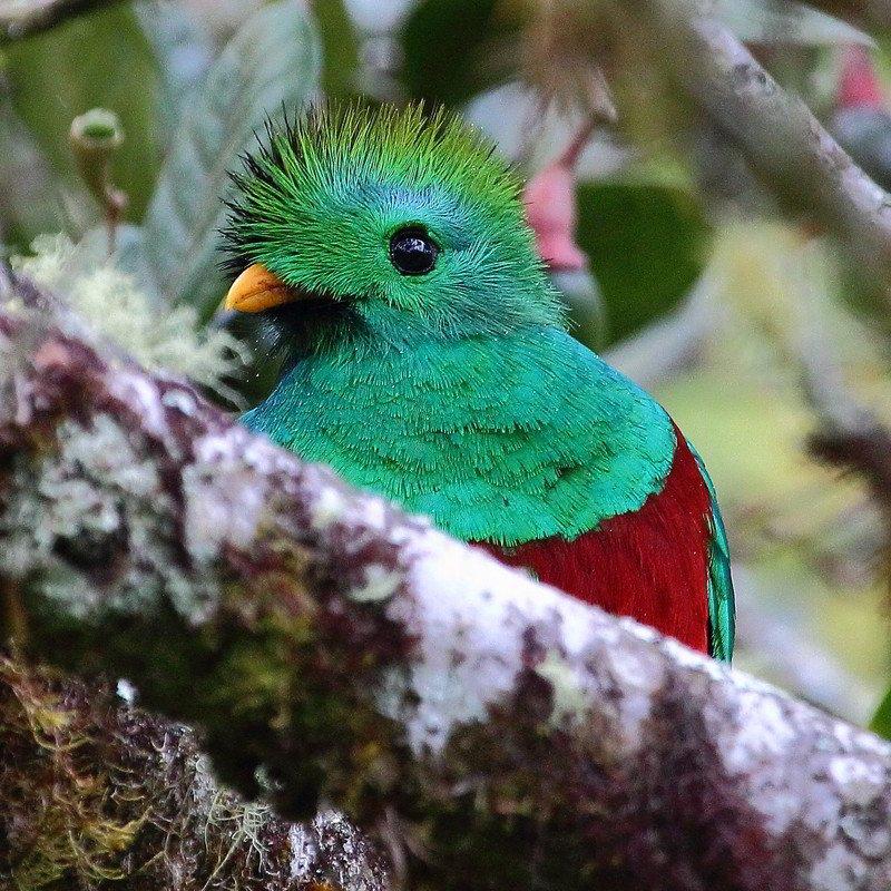 Putovanje Kostarika - Zemlja vulkana i raskošna Panama (10)