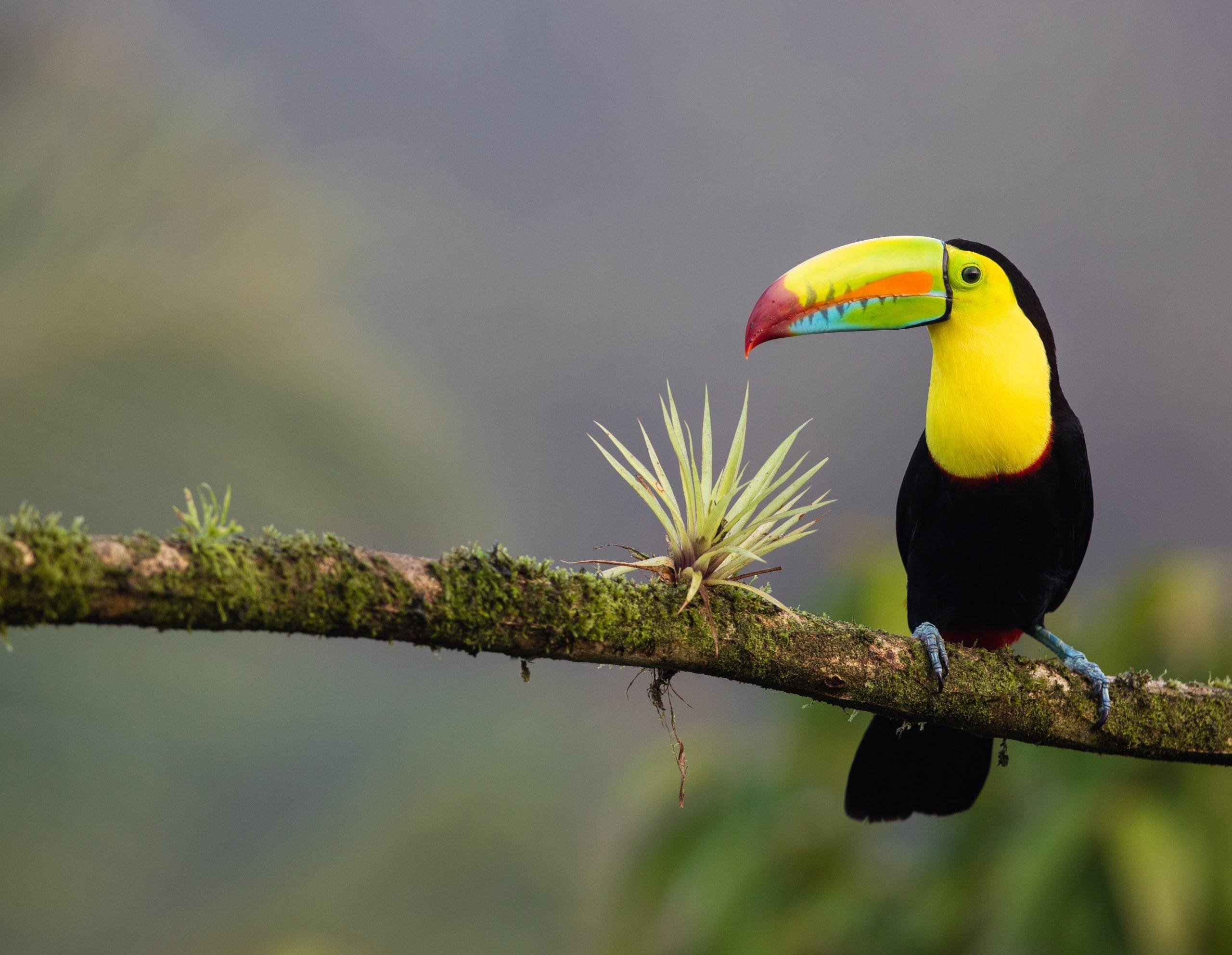 Putovanje Kostarika - Zemlja vulkana i raskošna Panama (17)