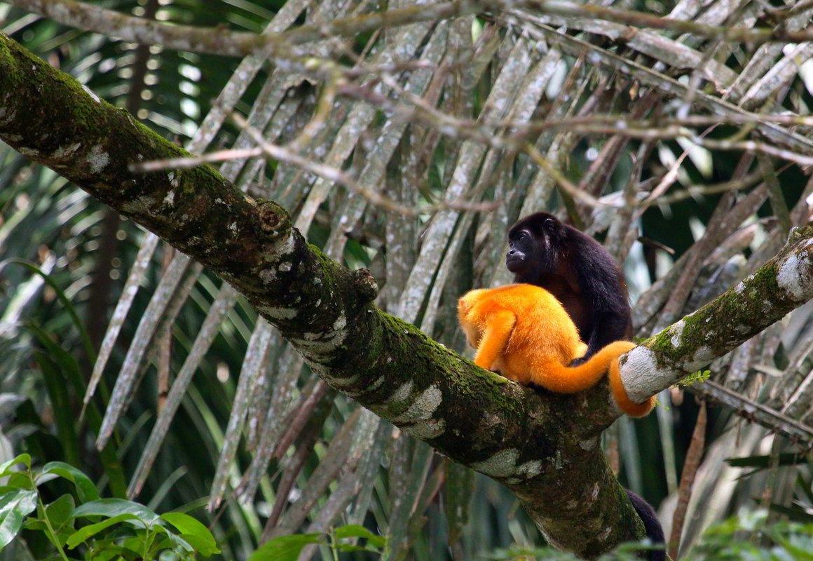 Putovanje Kostarika - Zemlja vulkana i raskošna Panama (2)
