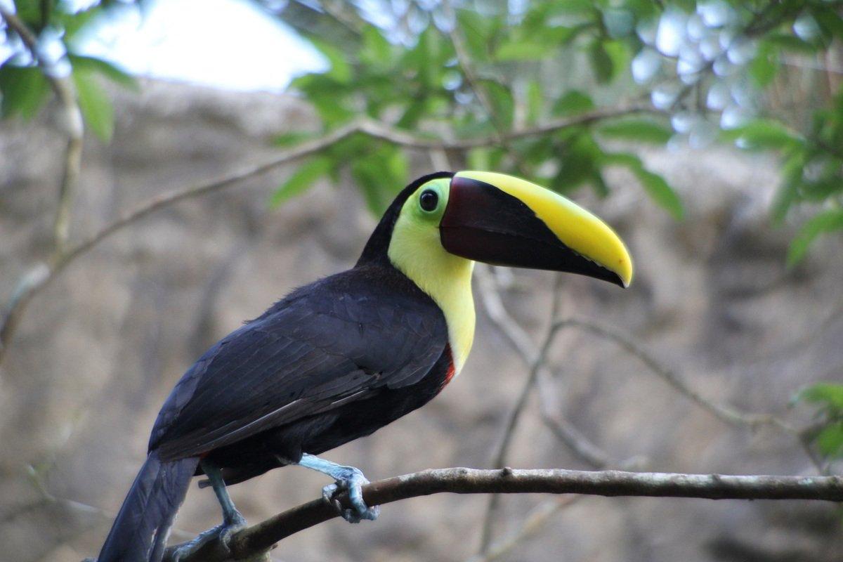 Putovanje Kostarika - Zemlja vulkana i raskošna Panama (20)