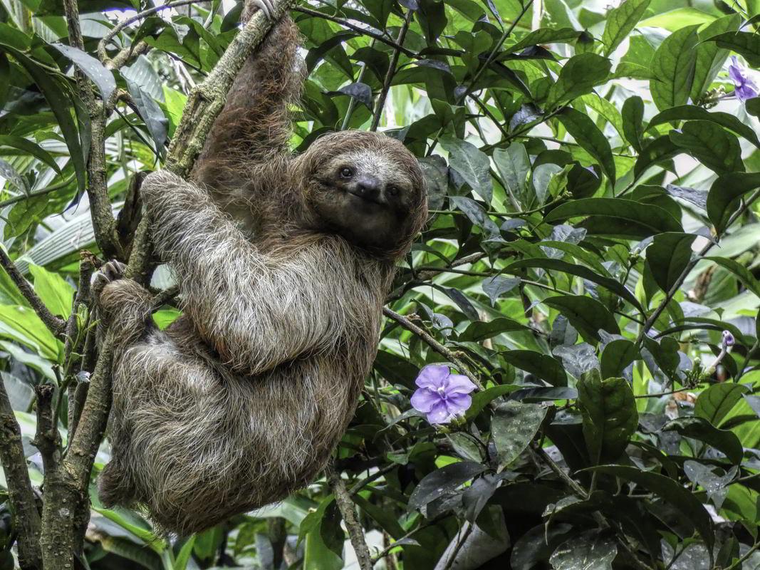 Putovanje Kostarika - Zemlja vulkana i raskošna Panama (7)