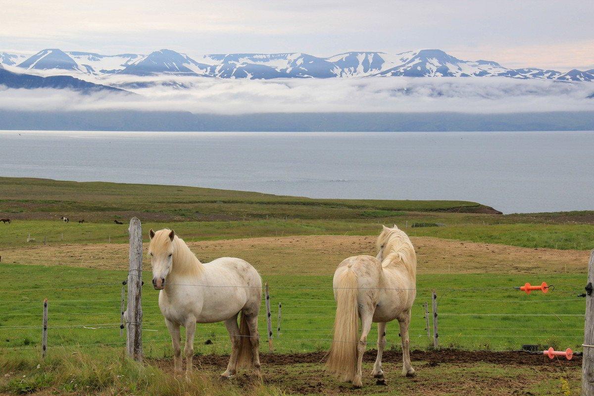 Husavik-Canyon-Island - Istražite Arktičku obalu-13